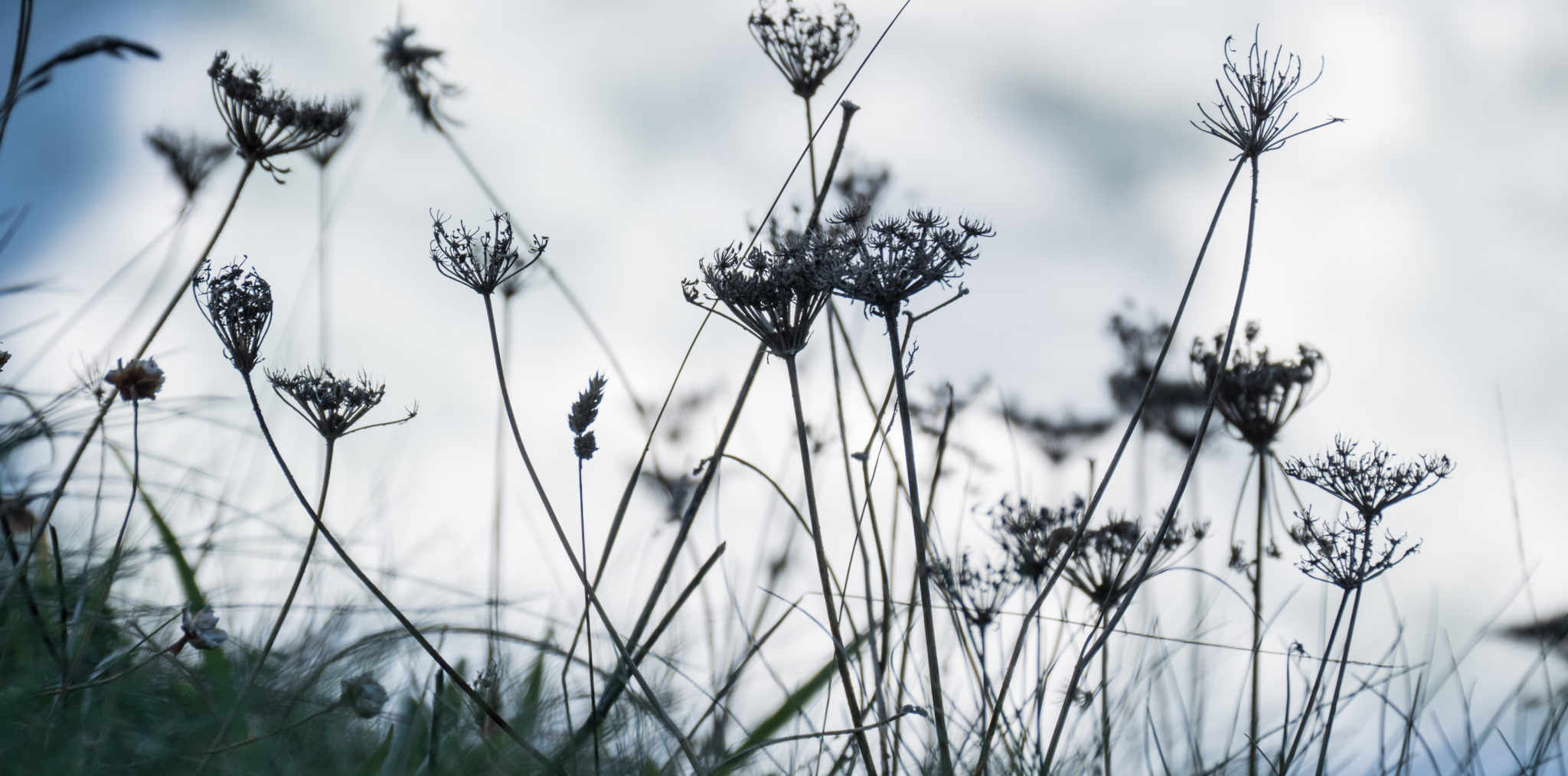 HJTC - Ademtherapie - bloemenveld